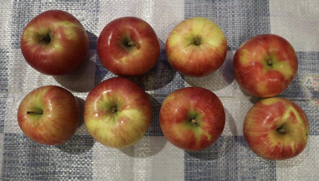 りんご詰め放題の結果